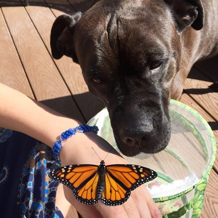 dog looking at monarch butterfly sitting on his owner's hand