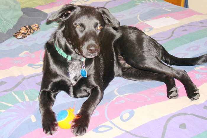 black dog lays on a colorful blanket