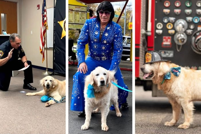 dog bucket list items: collage of dog being sworn in by police officer; dog meets elvis impersonator; dog wearing a firemans hat next to a firetruck