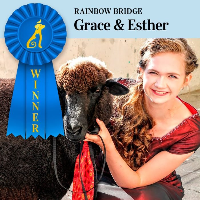 Pet Pals Winner, Rainbow Bridge category. Grace, dressed for the homecoming dance, and Esther, the sheep, dressed in a matching tie