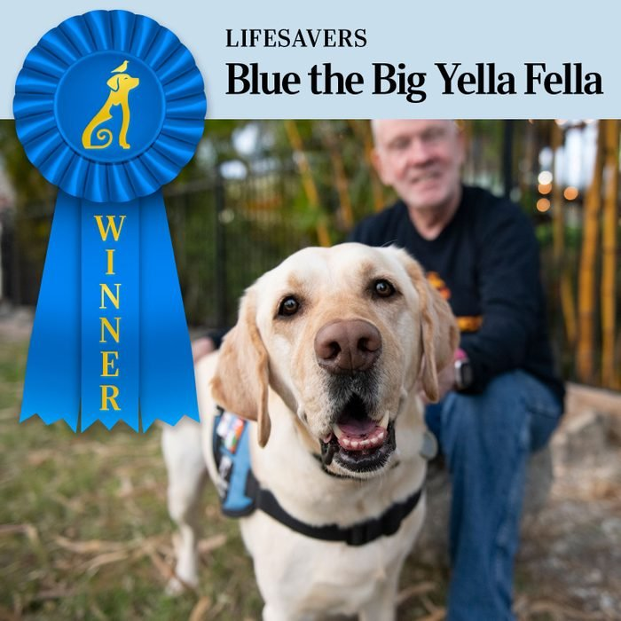 Pet Pals Winner, Lifesavers category. close up the service dog with the veteran in the background