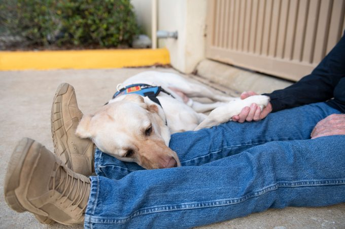 the service dog lays next to the veteran's legs; the man holds the dog's paw