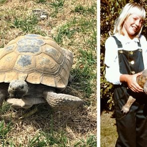 left: large tortoise on the grass; right: a young boy holds a young tortoise