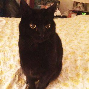 black cat sitting on a yellow bedspread