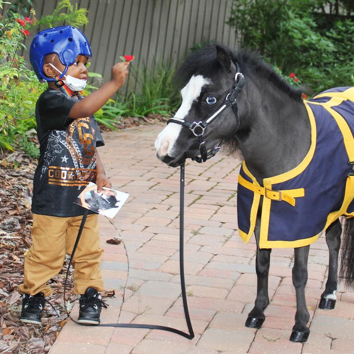 child standing and interacting with Magic, the therapy miniature horse