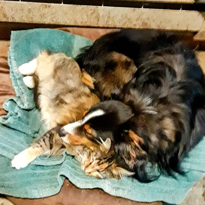 dog and cat curled up together