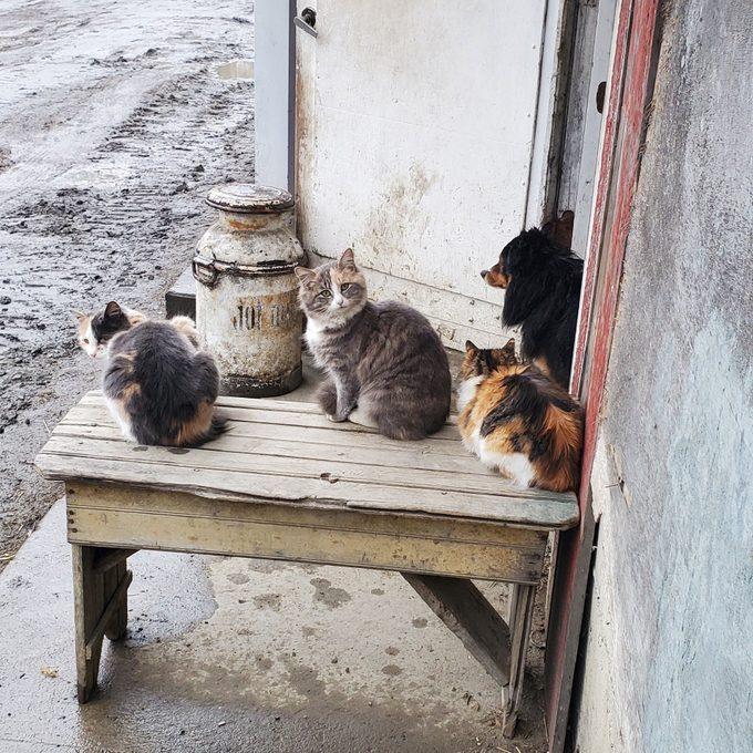 dog and three kittens