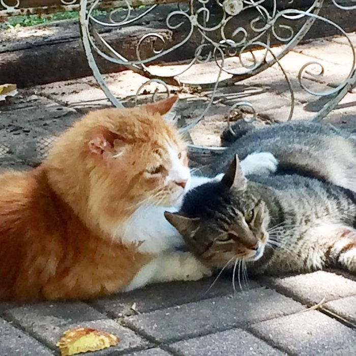 two cats laying together on paving stones