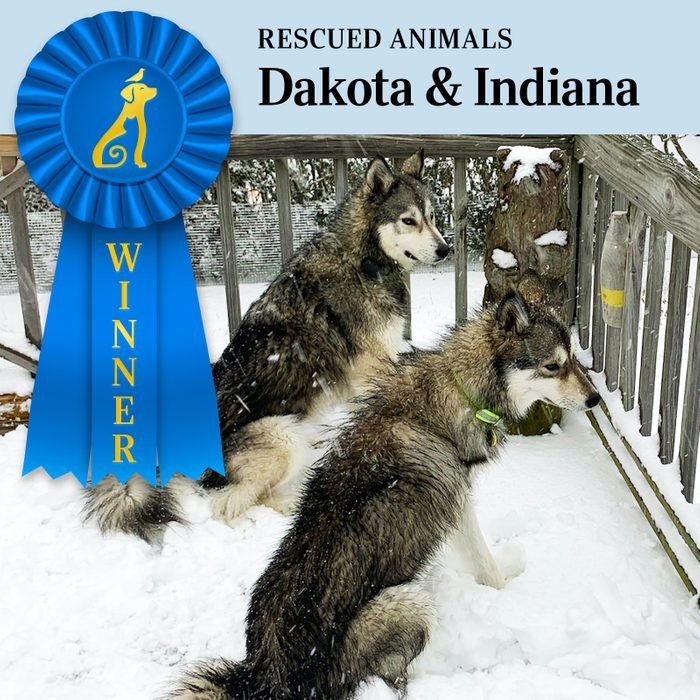 Pet Pals Winner, Rescued Animals category. two dogs, Dakota and Indiana, stand next to each other on a snowy deck