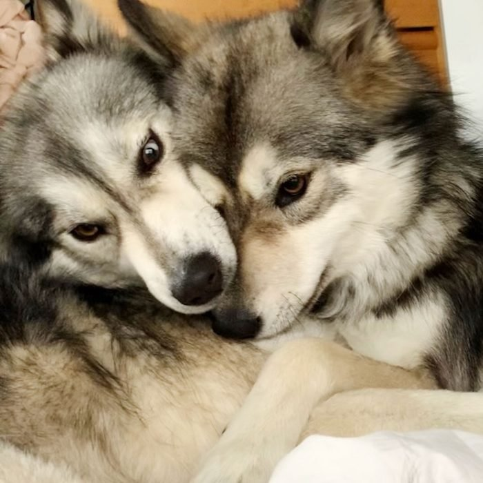 two dogs with their faces close together