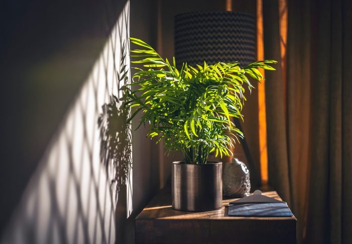House plant and Sunshine
