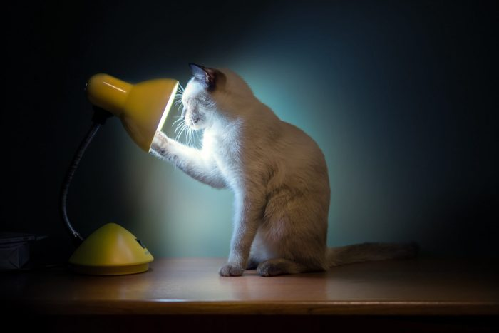 Side View Of Cat Touching Desk Lamp While Sitting On Table Against Wall At Home