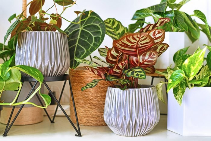 Various different tropical house plants in flower pots arranged on shelf
