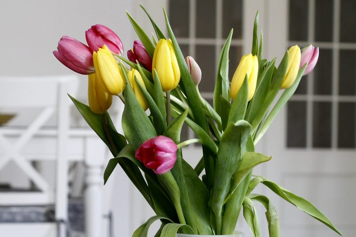 Close-up of Tulips in a jar at dinning-room