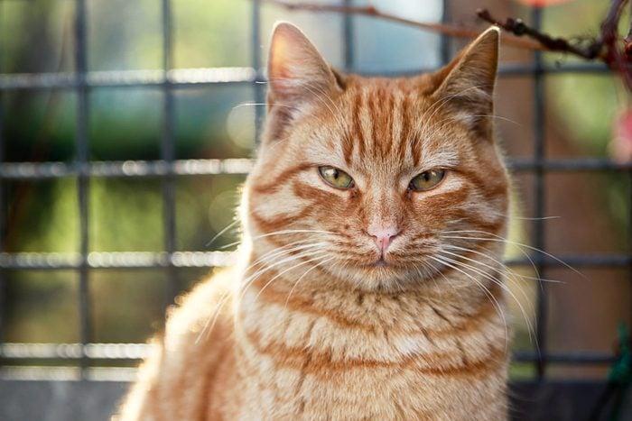 Sweet Street Cat