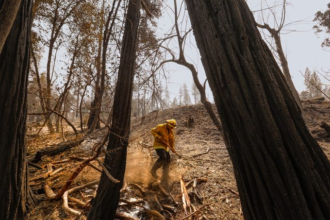 Berry Creek, California-Sept. 17, 2020-A fireman puts out hot spots in the town of Berry Creek