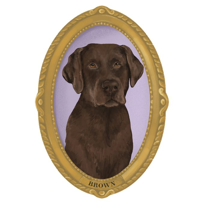 Portrait of Brown the dog in a frame