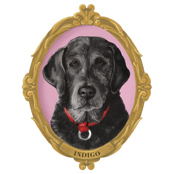 Portrait of Indigo the dog in a frame