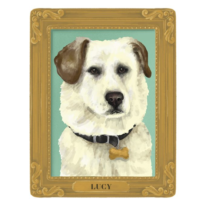 Portrait of Lucy the dog in a frame