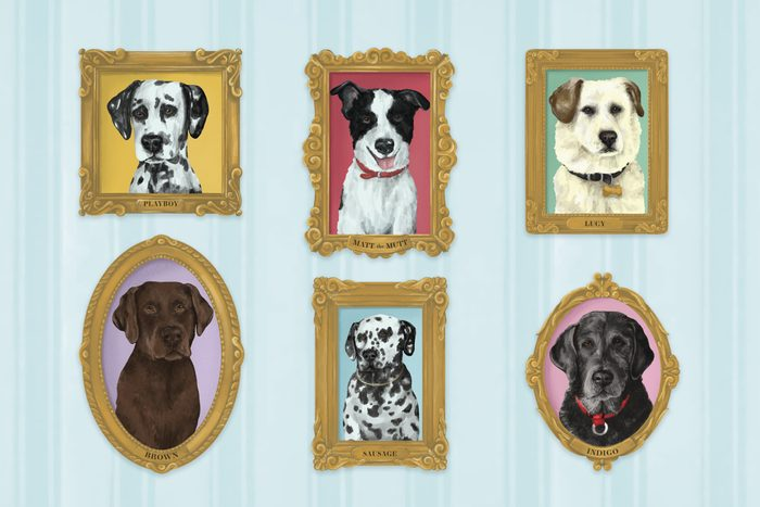 portraits of 6 dogs in frames on a blue wall paper