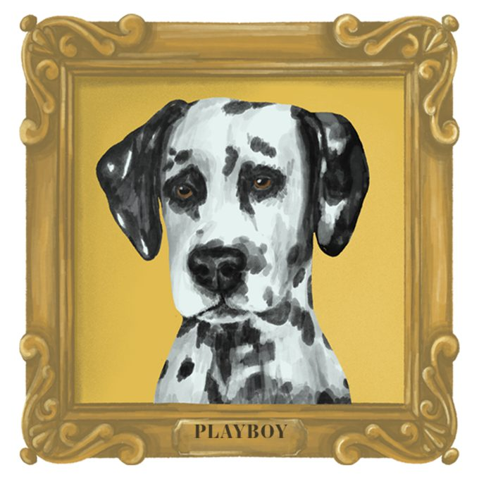 Portrait of Playboy the dog in a frame