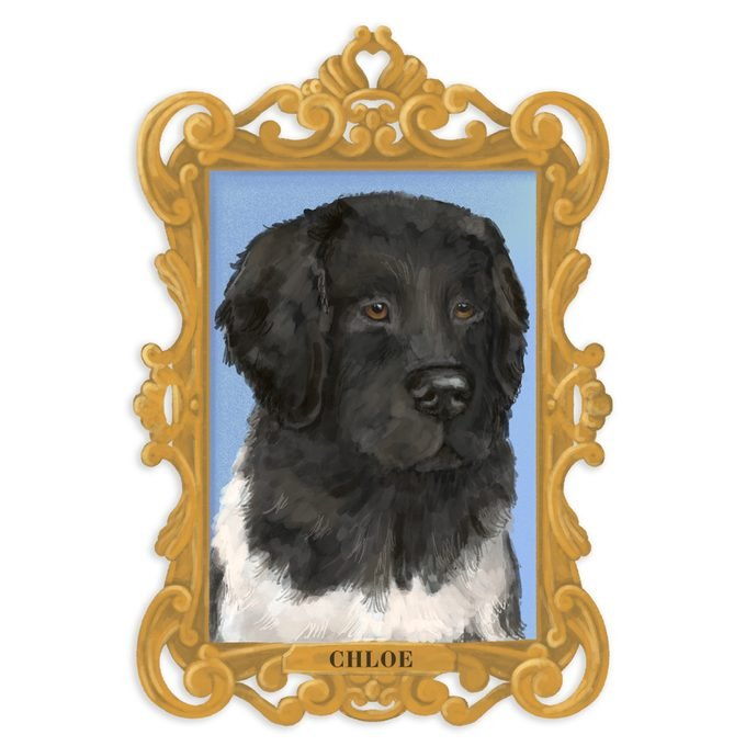 Portrait of Chloe the dog in a frame