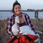 After a Woman Rescued an Injured Swan, Strangers Helped Her Get the Bird Across the City to a Rehab Center
