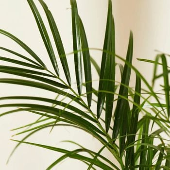 20 Air-Purifying Plants for Your Home
