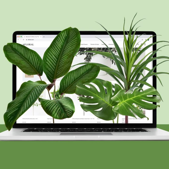 House plants coming out of a laptop, buying plants online