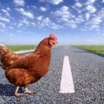"""30 of the Funniest """"Why Did the Chicken Cross the Road"""" Jokes"""