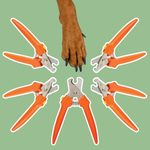I'm a Vet—And These Are the Only Dog Nail Clippers I Use