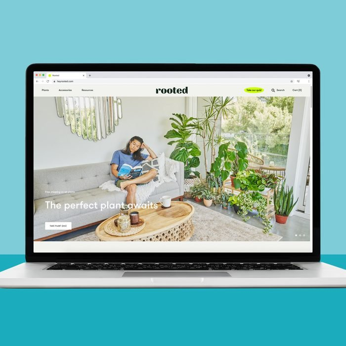 Buying plants online at Hey rooted
