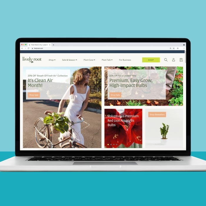 Lively Root online flower shop