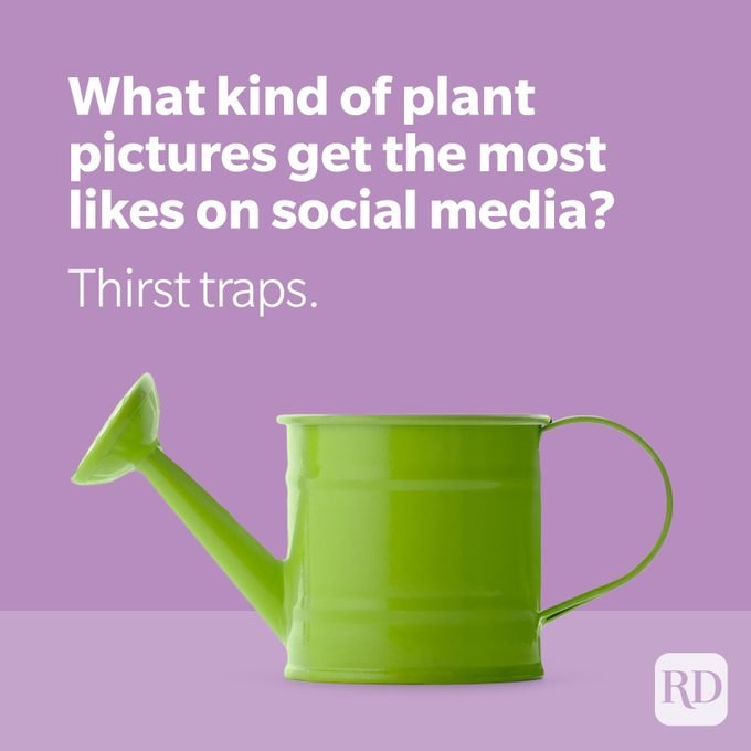 Green watering can on purple background with plant joke