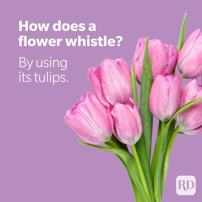Pink tulips on purple background with joke
