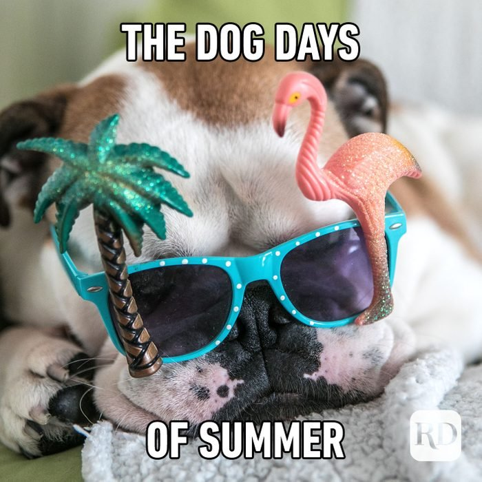 Meme text: The dog days of summer