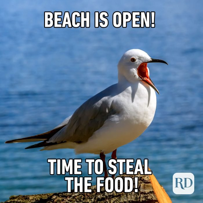 Meme text: Beach is open! Time to steal the food!
