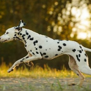 13 Of The Fastest Dog Breeds In The World Opener