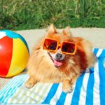 7 Best Dog Sunscreens to Protect Your Pup