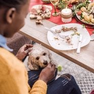 Which Thanksgiving Foods Are Safe to Slip Under the Table for Pets?