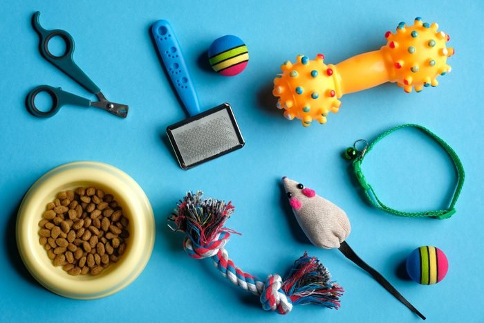 Accessories for cat and dog on blue background.
