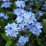 15 Colorful Flowers That Grow in Shade