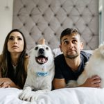 20 of the Best Dog Movies to Watch with Your Pooch