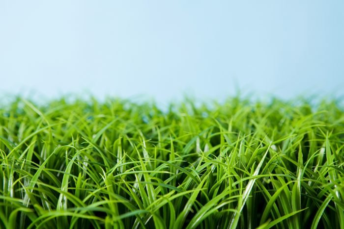 grass with blue background