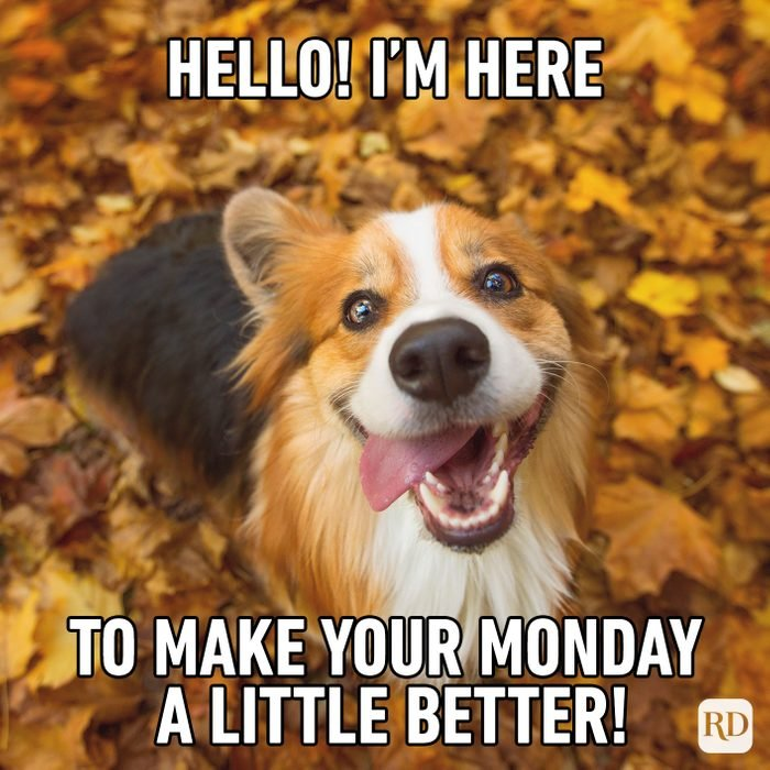 Hello! I'm Here To Make Your Monday A Little Better!