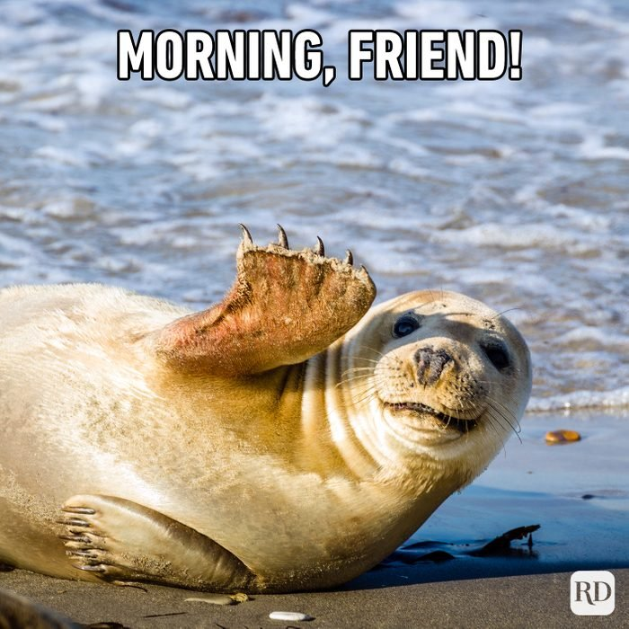 Morning, Friend!
