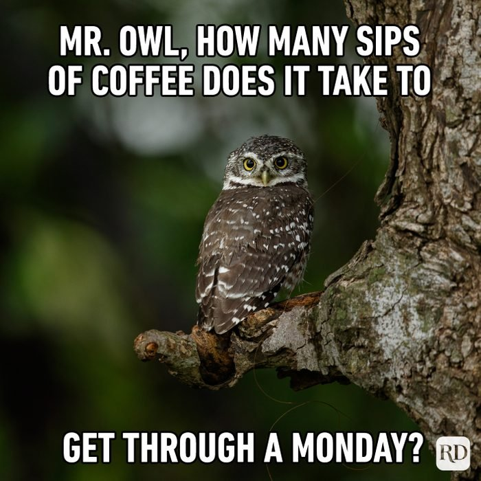 Mr. Owl, How Many Sips Of Coffee Does It Take To Get Through A Monday?