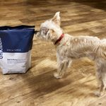 This Dog Food Brand Sold Out Twice in Its First Month