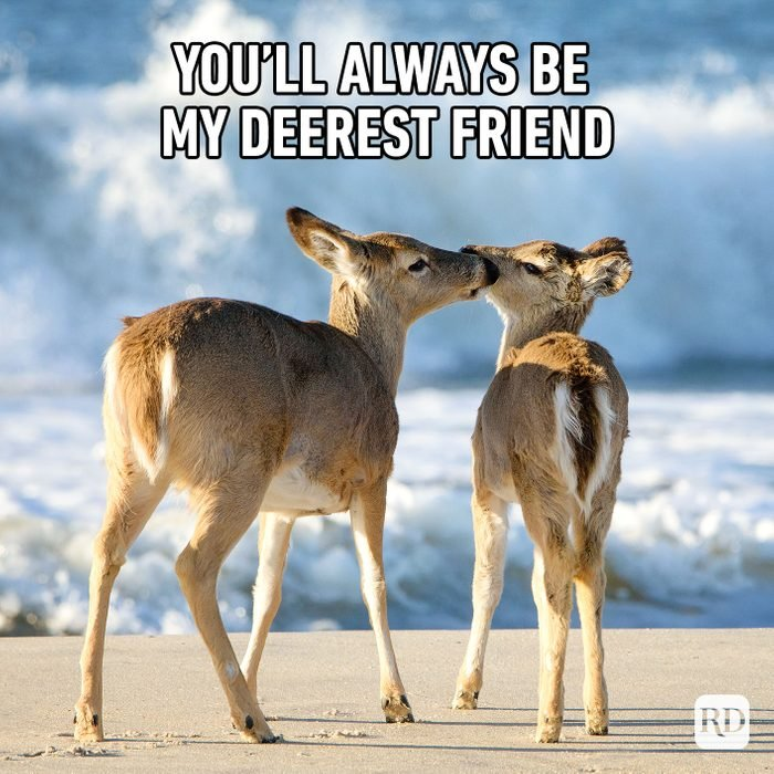 You'll Always Be My Deerest Friend