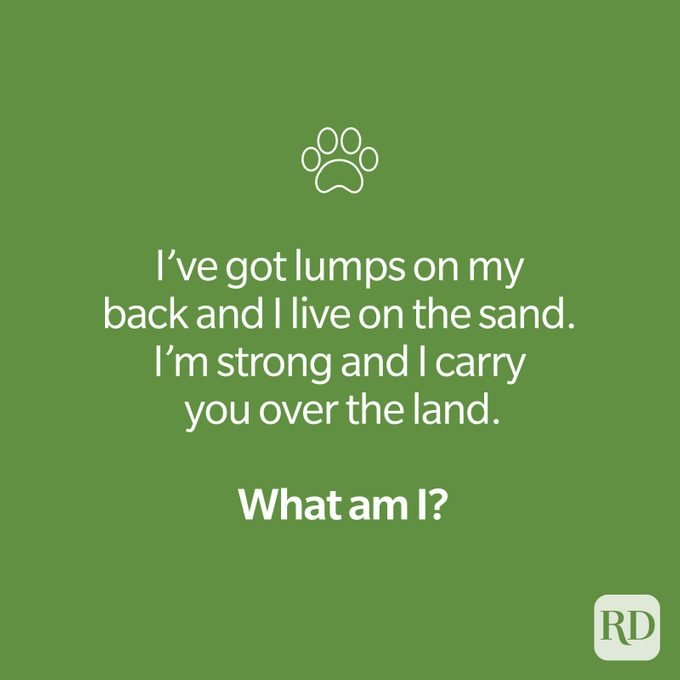 Animal riddle with paw print